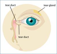 Dry Eye Chart
